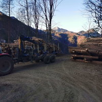 Holztransport von Jernej Services